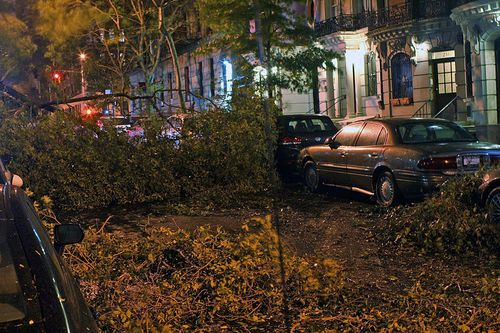 Trees down in NYC